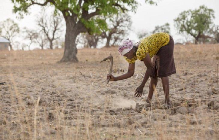 Треть мирового производства продуктов питания подвержена риску климатического кризиса
