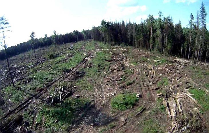 Создано приложение, которое позволяет сажать деревья для борьбы с вырубкой лесов