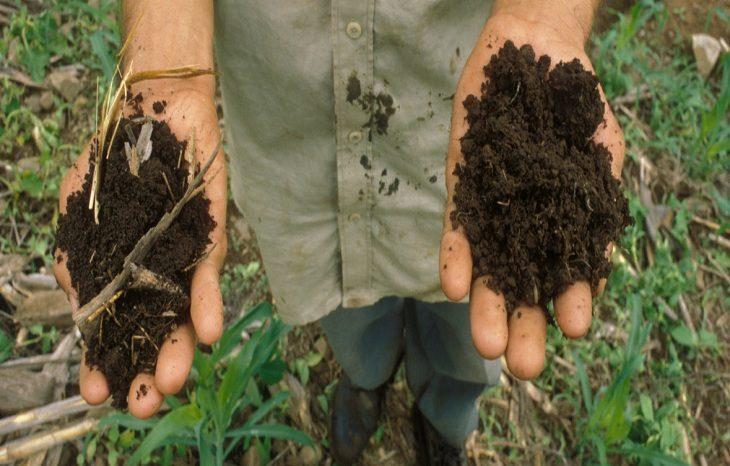 Чистая почва поможет в борьбе с изменением климата
