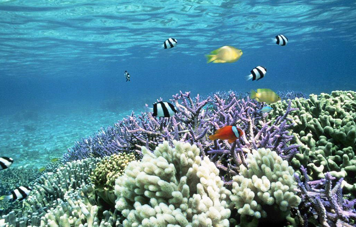 Climate change will lead to annual coral bleaching, UN-supported study predict