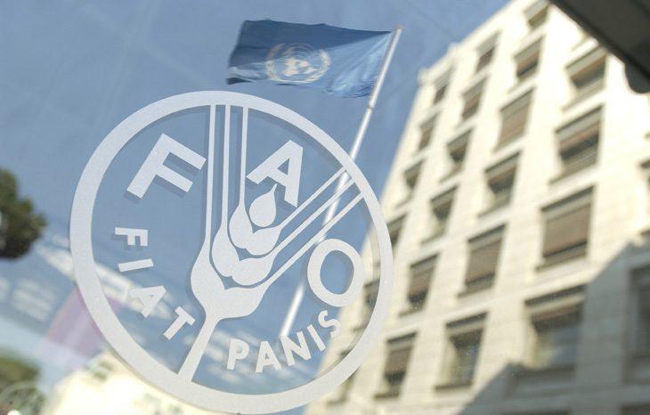 ФАО выступила с инициативой по сокращению потерь продовольствия
