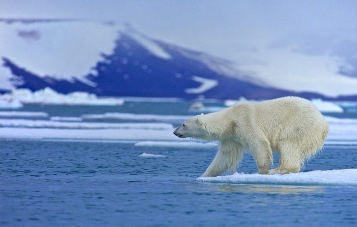 На севере Канады зафиксировано рекордное потепление климата