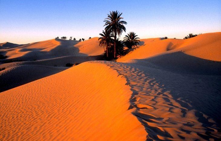 ВИЭ «озеленят» Сахару