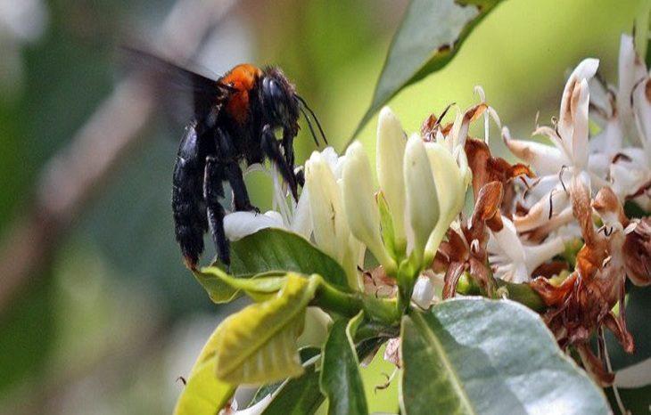 Пчелы на грани исчезновения