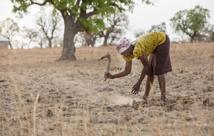 Third of global food production at risk from climate crisis