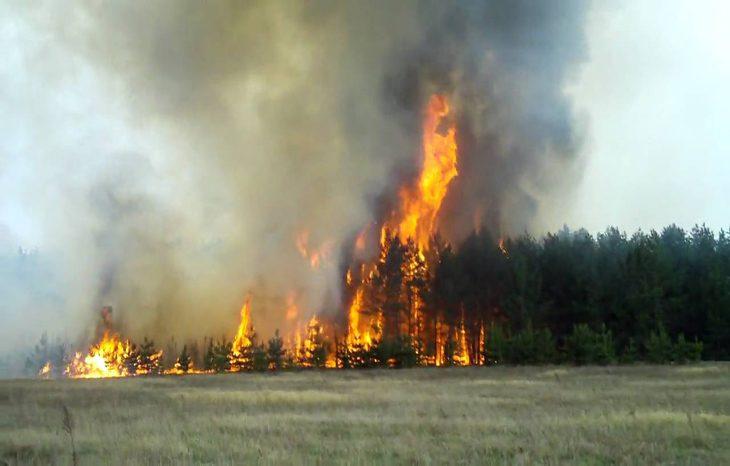 Глобальное потепление привело к росту количествалесных пожаров