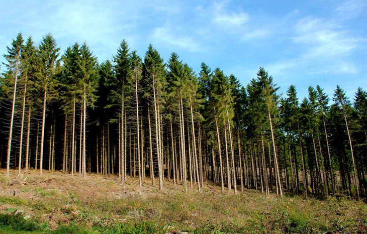 В ООН обсудили пути рационального использования лесов на благо устойчивого развития