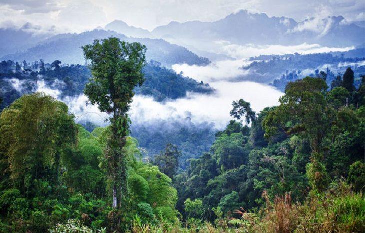 Леса в Амазонке способны провоцировать появление дождя