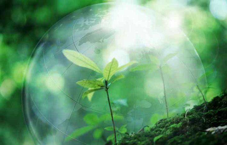 ООН: человечество не выживет без новых лесов
