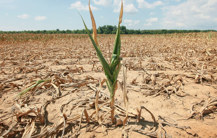 Global food producers 'failing to face up to role' in climate crisis